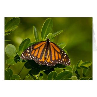 Mariposa de monarca tarjeta