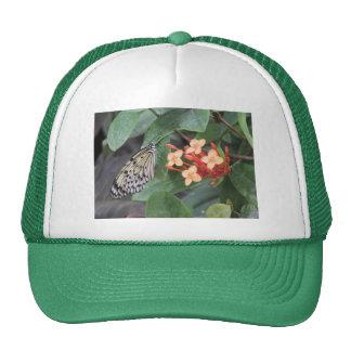 Mariposa de papel de la cometa gorras