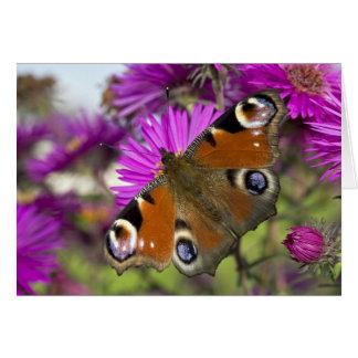 Mariposa de pavo real tarjeta de felicitación