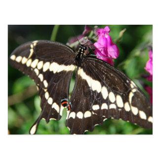 Mariposa de Swallowtail del tigre Postal