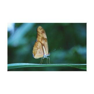 Mariposa del iulia del Dryas Impresiones De Lienzo