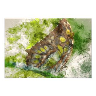 mariposa del malachit foto