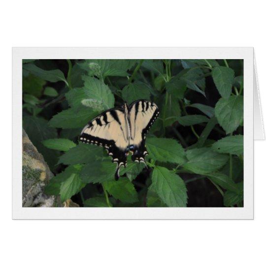 Mariposa del patio trasero tarjeta de felicitación