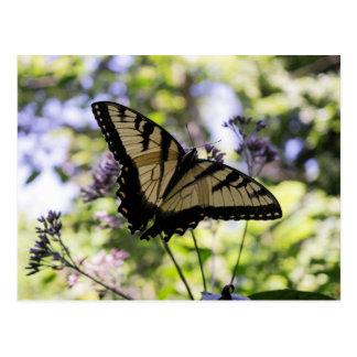 Mariposa del tigre en una postal de la flor