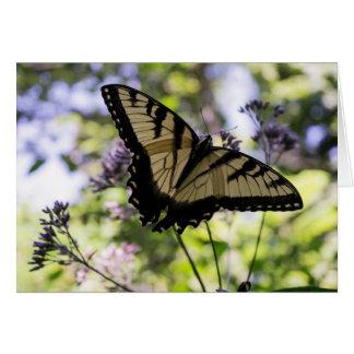 Mariposa del tigre en una tarjeta de la flor