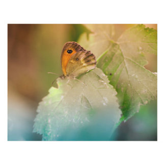 Mariposa del verano en una hoja cuadro