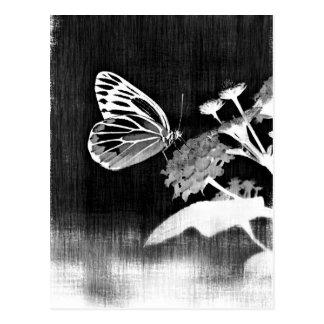 Mariposa del vintage en la flor - blanco y negro postal