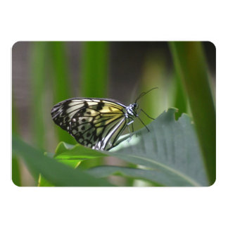 Mariposa delicada invitación 12,7 x 17,8 cm