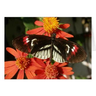 Mariposa dominante del piano en la flor anaranjada tarjeta de felicitación