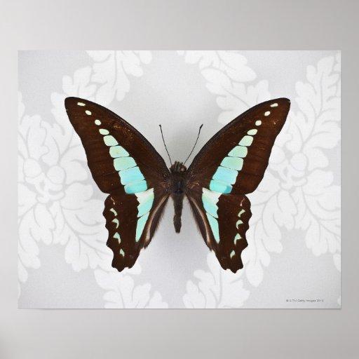 Mariposa en fondo del papel pintado poster