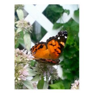 Mariposa en la menta de montaña postal