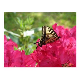 Mariposa en la postal de la azalea