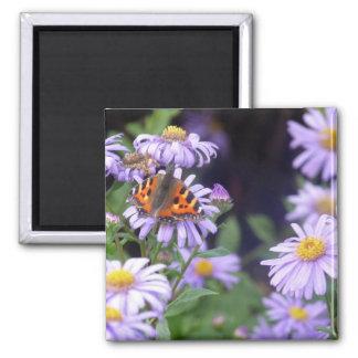 Mariposa en las flores imán