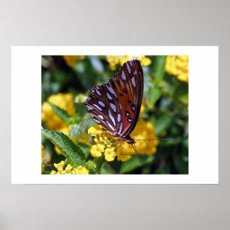 Mariposa encaramada en Lantana de oro Póster
