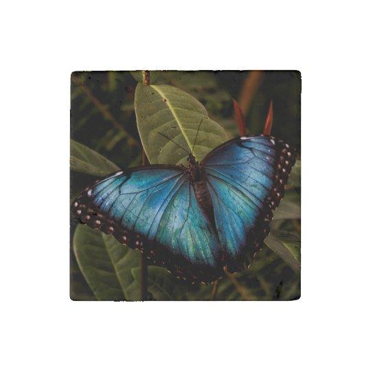 Mariposa grande, hermosa, azul imán de piedra