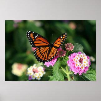 Mariposa hermosa del monarca o del virrey póster