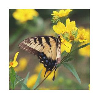 Mariposa, impresión envuelta de la lona