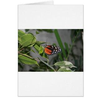Mariposa manchada blanco y negro anaranjada tarjetón