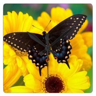Mariposa negra de Swallowtail Reloj Cuadrado