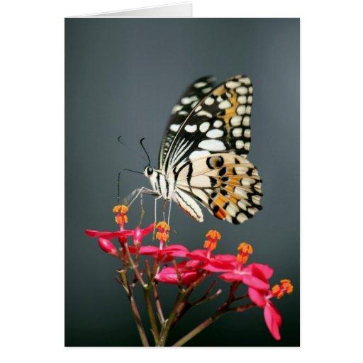 Mariposa negra y amarilla blanca en las flores ros tarjetón