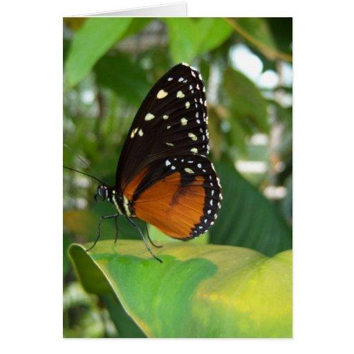 Mariposa negra y anaranjada con los puntos blancos felicitacion
