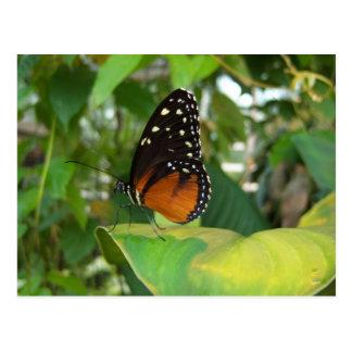 Mariposa negra y anaranjada con los puntos blancos