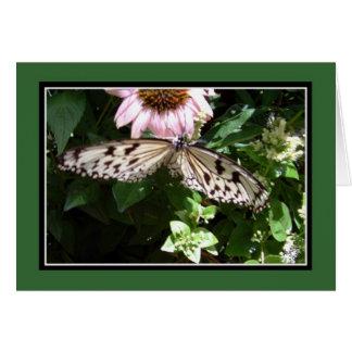 Mariposa negra y blanca tarjetón