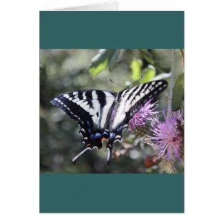 Mariposa occidental de Swallowtail del tigre Tarjeta De Felicitación
