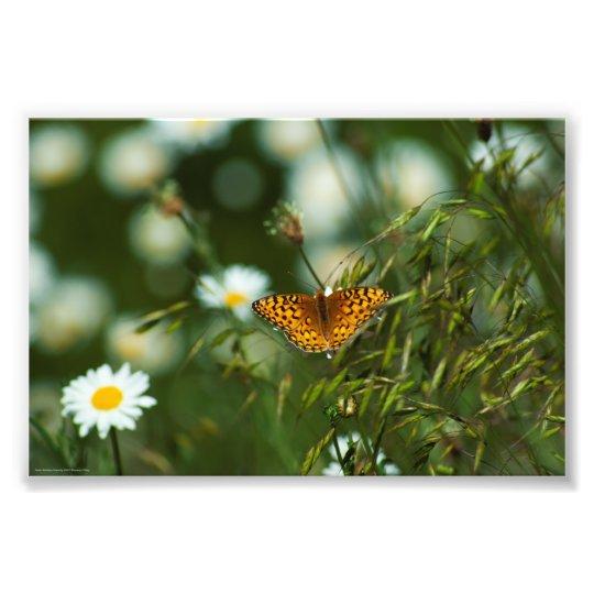 Mariposa pacífica del Fritillary Foto