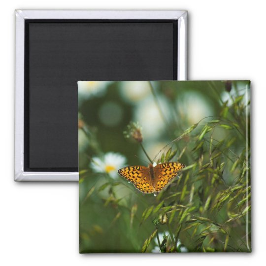 Mariposa pacífica del Fritillary Imán