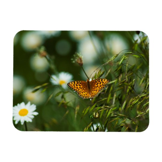 Mariposa pacífica del Fritillary Iman