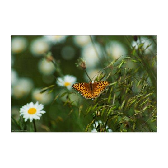 Mariposa pacífica del Fritillary Impresión Acrílica