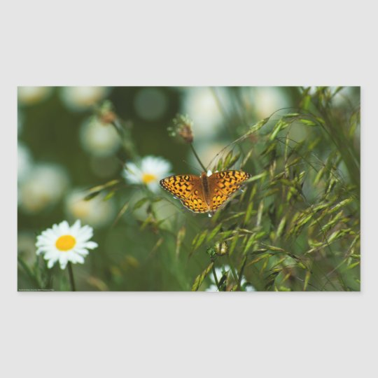 Mariposa pacífica del Fritillary Pegatina Rectangular