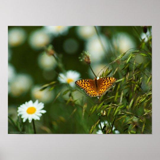 Mariposa pacífica del Fritillary Póster