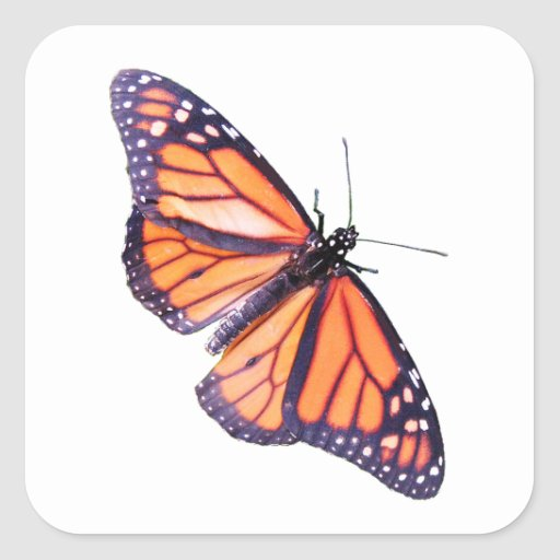 Mariposa Calcomanía Cuadrada