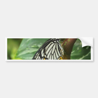 Mariposa Pegatina Para Coche