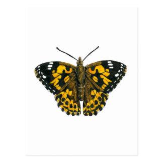 Mariposa pintada de la señora postal