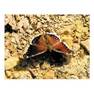 mariposa postal