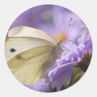 Mariposa que alimenta en la flor etiqueta redonda