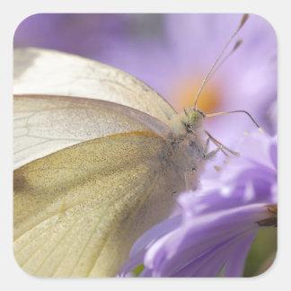 Mariposa que alimenta en la flor pegatina cuadradas personalizada