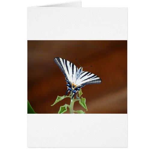 Mariposa rayada blanco y negro de la cola de milan tarjeton