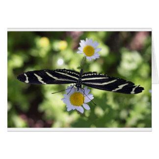 Mariposa rayada blanco y negro hermosa felicitaciones