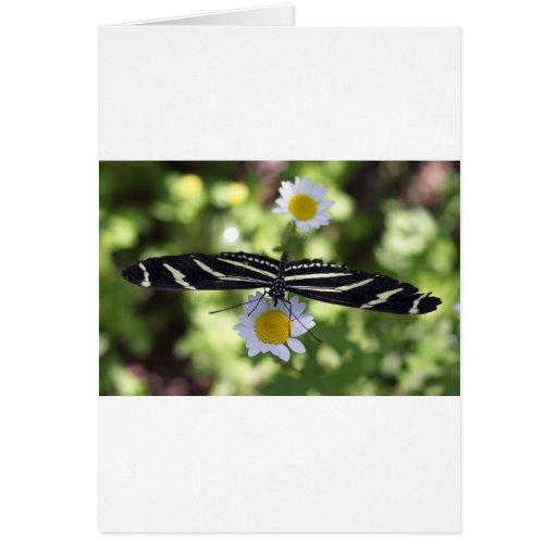 Mariposa rayada blanco y negro hermosa tarjeton