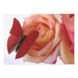 mariposa roja en la invitación color de rosa rosad