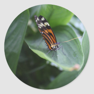 Mariposa Etiquetas Redondas