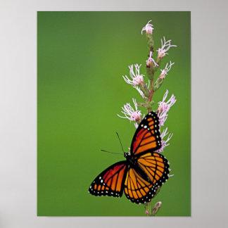 Mariposa y flor de monarca en fondo verde póster