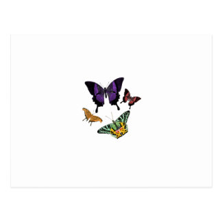 mariposas bonitas postal