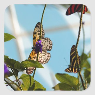 Mariposas Pegatina Cuadrada