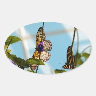 Mariposas Pegatina Ovalada