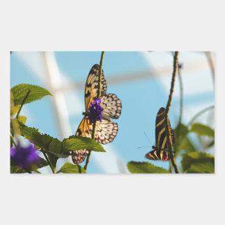 Mariposas Pegatina Rectangular